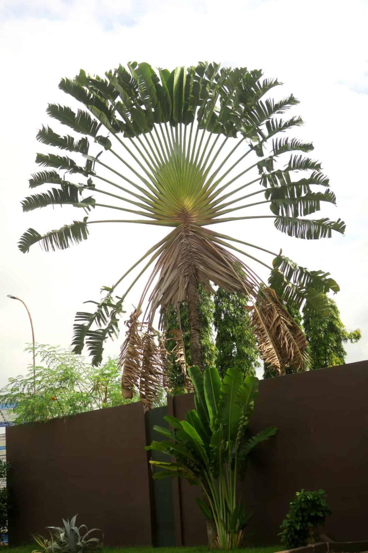 Eindrucke Aus Abidjan Flora Und Fauna Pflanzen Tropisch