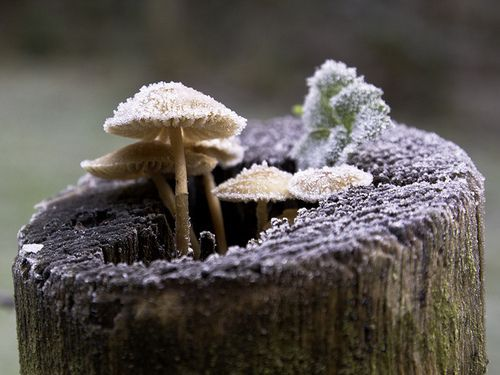 mushrooms | Tumblr
