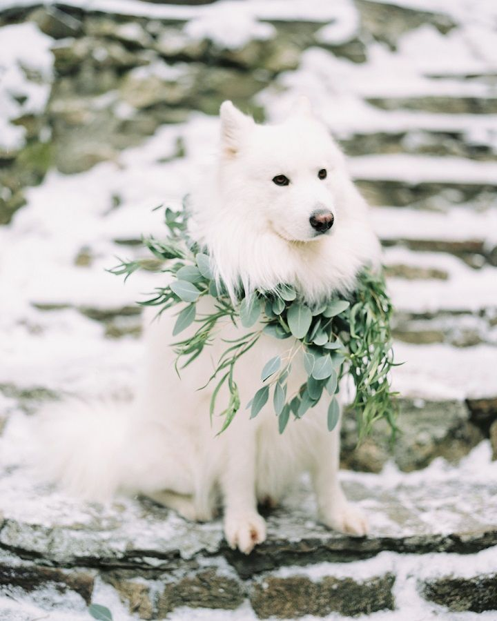 Dog at wedding - Christmas wintry wonderland engagement photo session | fabmood.com #engagement #engaged #engagementphotos #winterengagement #christmas #fireplace #snowengagement #wintrywonderland