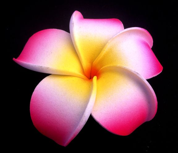 Everything about plumeria flower flowers and gardens everything about plumeria flower gardening home decor mightylinksfo Choice Image