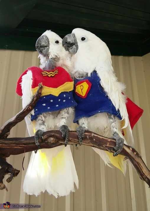 Super Parrot and Wonder Bird - Halloween Costume Contest at Costume