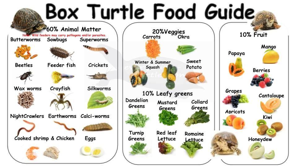 Box Turtle Food Guide Box Turtle Food Turtle Diet Box Turtle Diet
