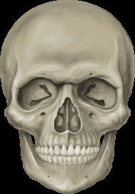Skeleton Head Free Download Png Skeleton Head Png Image With Transparent Background Png Free Png Images Skeleton Drawings Skeleton Head Drawing Skeleton Head