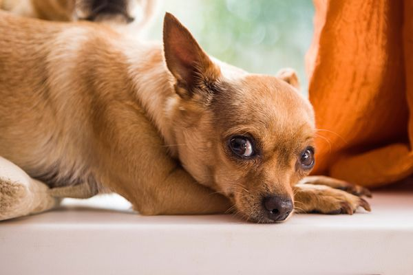 Dognapping How To Protect Your Dog And Get Him Back If He S Stolen Dog Allergies Dog Care