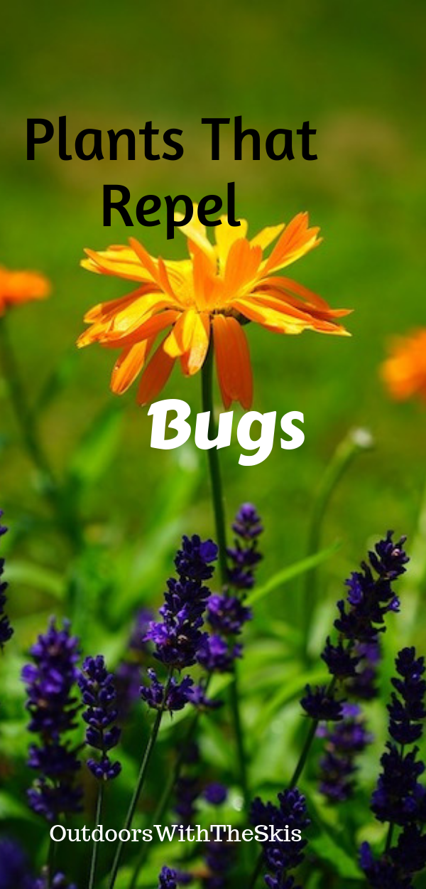 10 Plants That Repel Bugs Plants that repel bugs, Plants