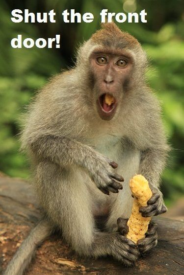 Beautiful Shut The Front Door! Monkey Meme !