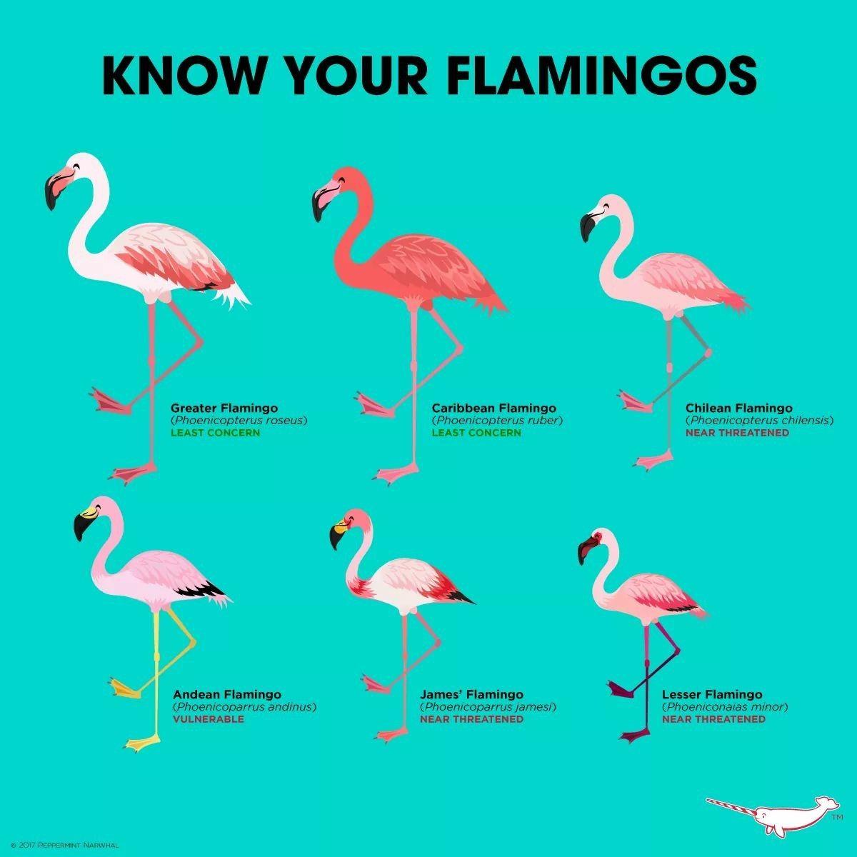 awesome birds」おしゃれまとめの人気アイデア|pinterest |aline