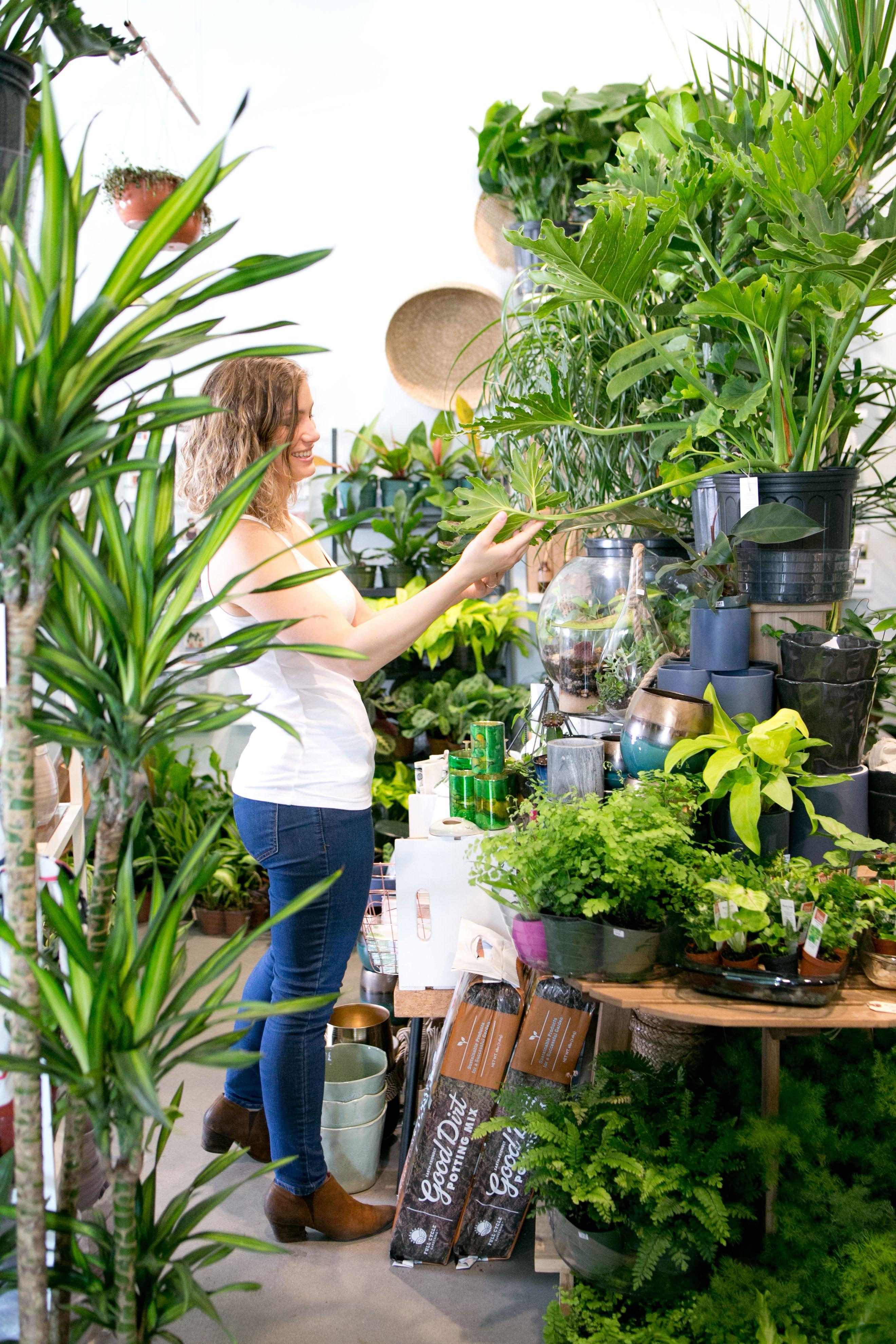 The Zen Succulent Plant Shop Plants Planting Succulents