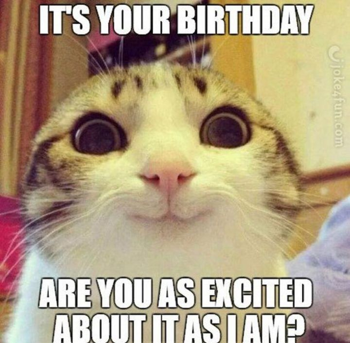 101 It S My Birthday Memes To Share Your Birthday Month Excitement Cute Animal Memes Funny Animal Pictures Funny Cat Pictures