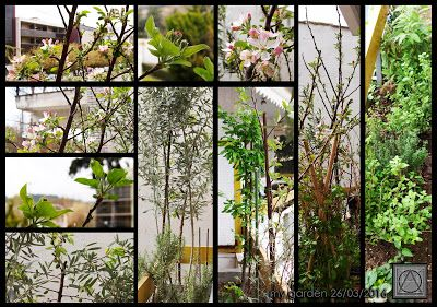 my garden 26/3/2016