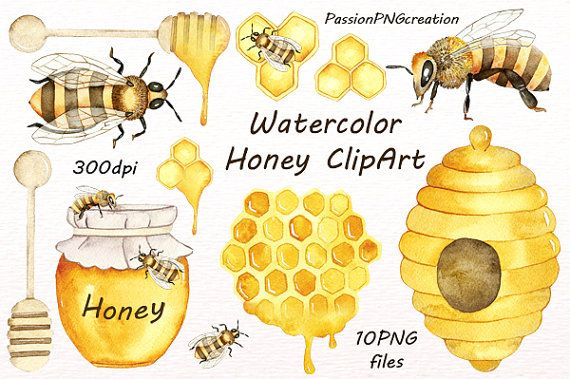 Watercolor Honey Clipart Watercolor Bee Clip Art Digital Clipart Png Handpainted Clipart Diy For Personal And Commercial Use Clip Art Bee Art Bee