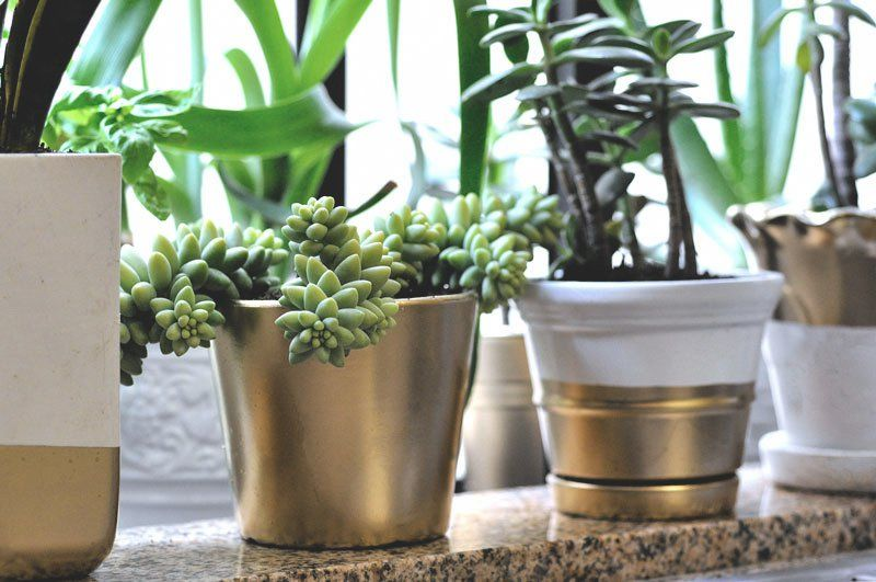 DIY Gold Dipped Potted Plants. Diy Home DécorPlant ...