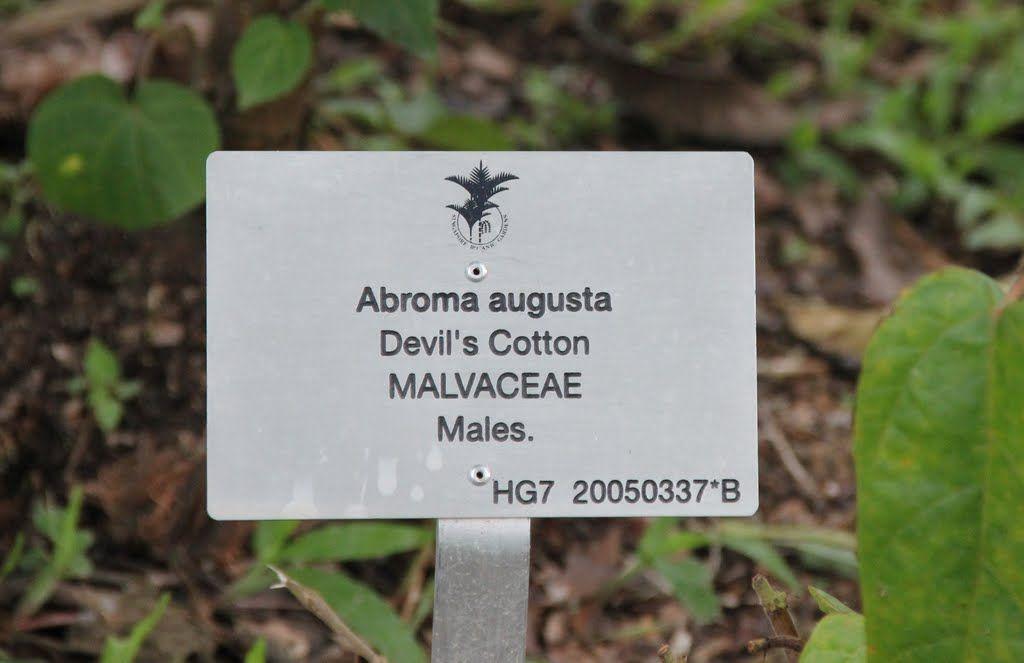 Image result for Singapore Botanic Garden plant label