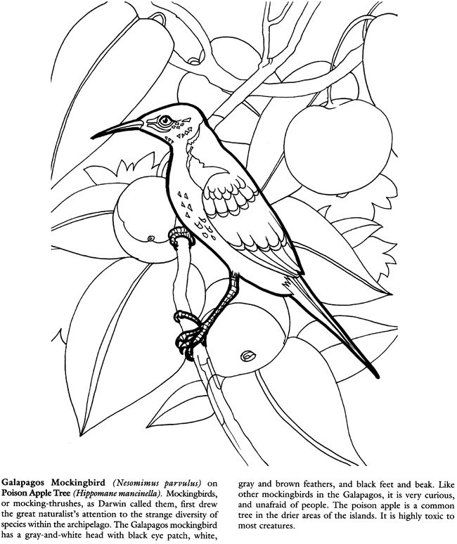 Galapagos Islands Coloring Book Dover Publications