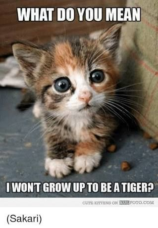 Image Result For Cute Funny Kitten Memes Cute Animals Funny Animal Pictures Cute Baby Animals