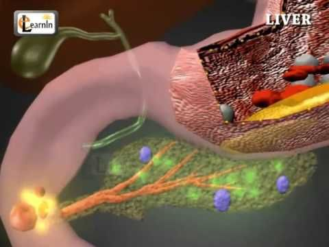 Liver Anatomy And Function Human Anatomy And Physiology Video 3d