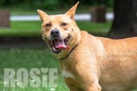 Rosie-ALL ABOUT ANIMALS RESCUE 478-621-5116 P. O. Box 4331  114 Parkview Grove Macon, GA 31208 allaboutanimalsmacon@juno.com