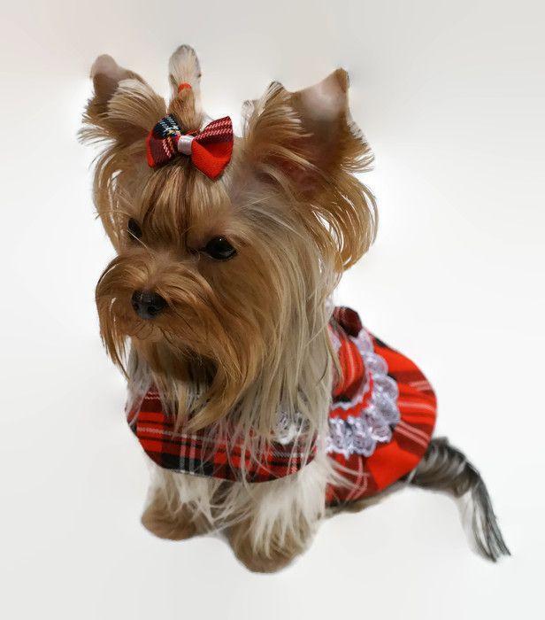 Yorkie Summer Dress Girl Dog Clothes Dog Clothes Girl Dog