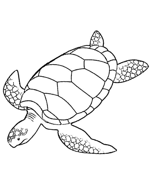 Green Sea Turtle Turtle Coloring Pages Sea Turtle Quilts