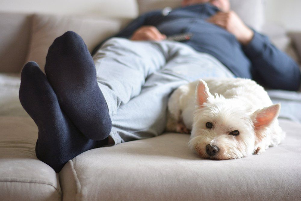 23 Things You Do That Your Dog Actually Hates Your Dog Dogs Pets