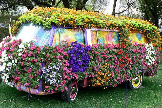 Dallas Blooms Beautiful flowers garden, Dallas arboretum