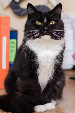 Metrowest Humane Society Awareness Cat adoption