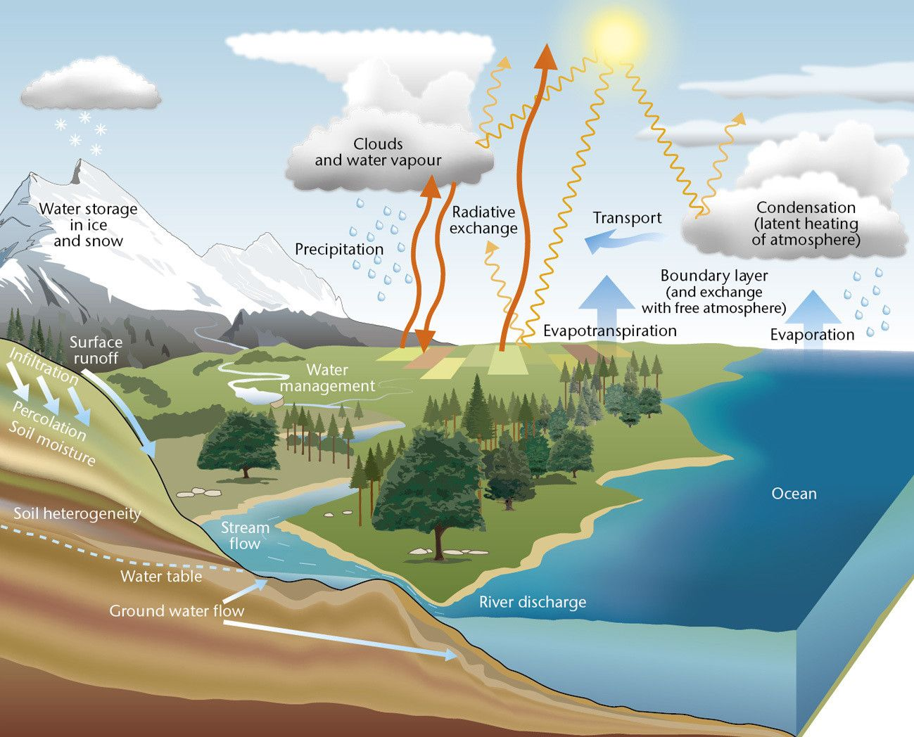 The Water Cycle Water Moves Continuously Between Land