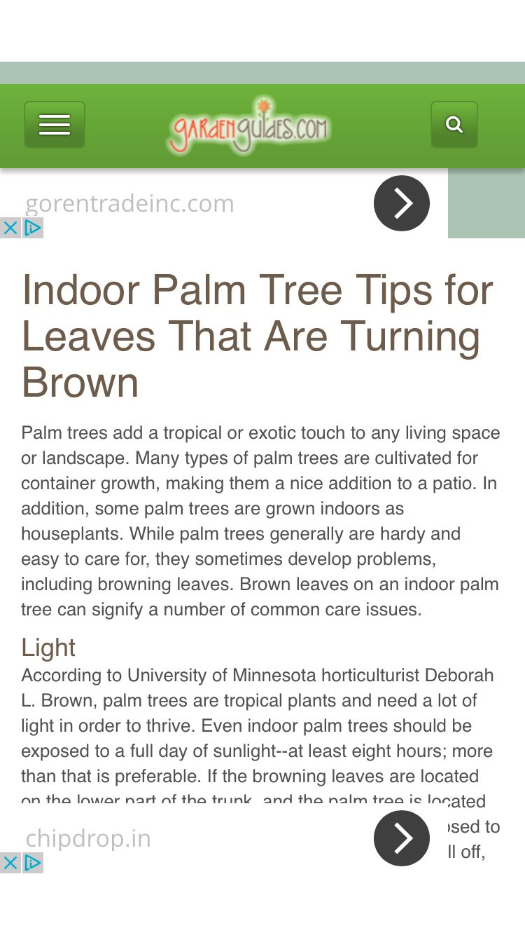Indoor Palm Tree Tips For Leaves That Are Turning Brown Indoor Palms Indoor Palm Trees Palm Tree Care