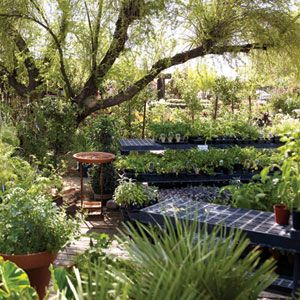 Garden Shopping In Phoenix, Arizona