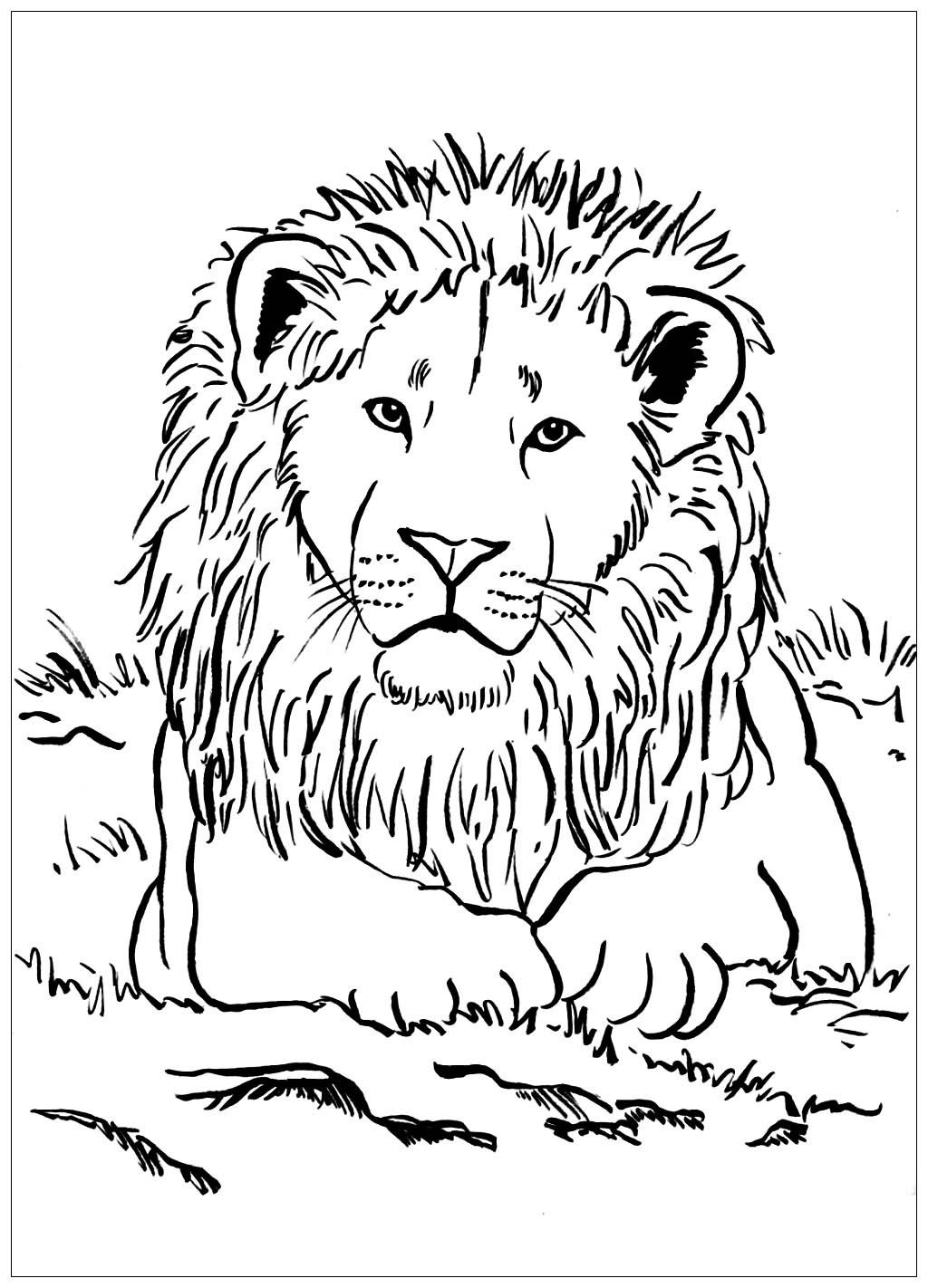 47+ Printable lion colouring pages info