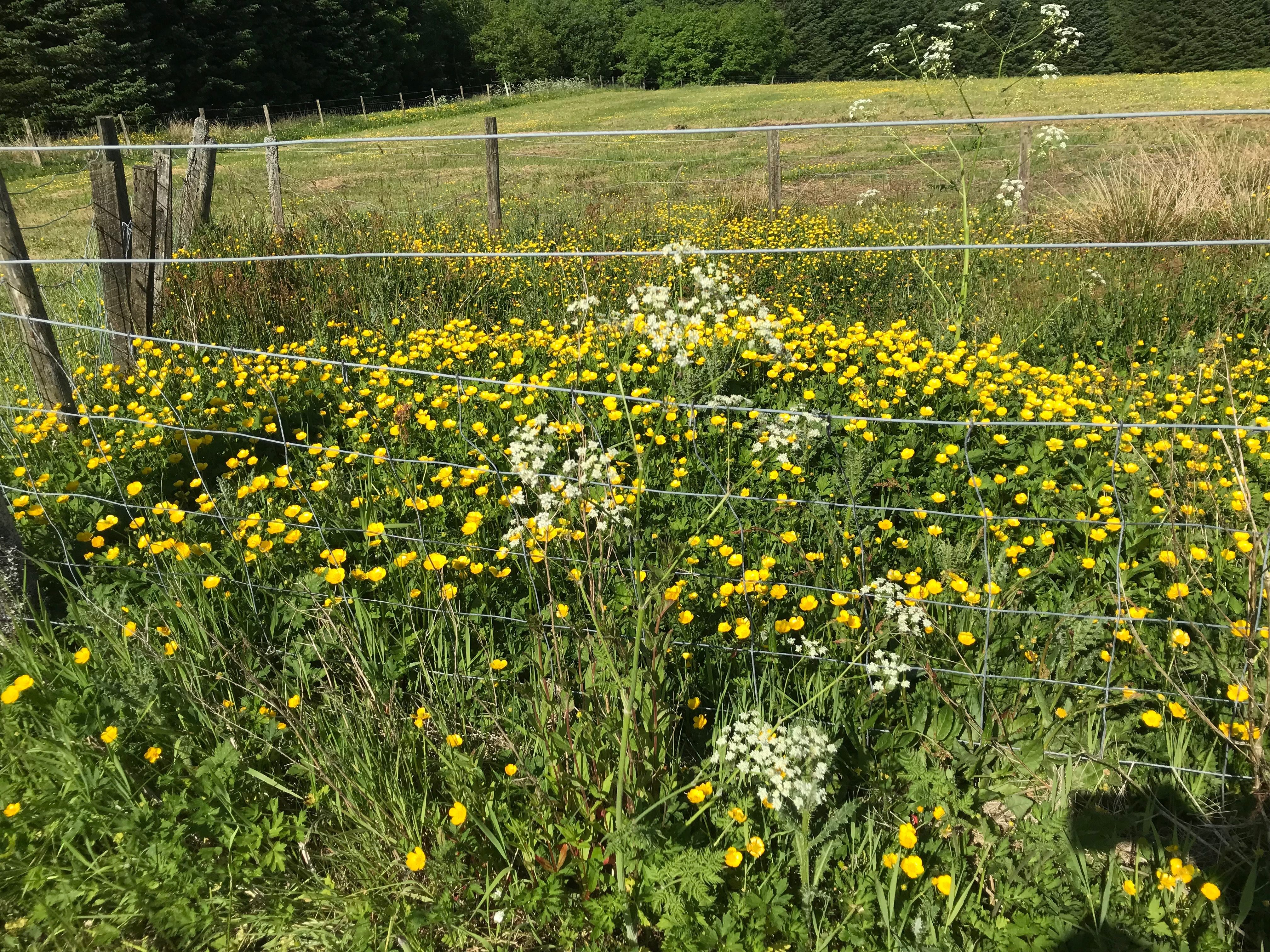 native prairie plants illinois