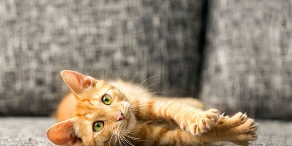 Ban Cat Declawing in NJ!