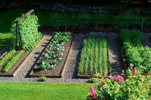 10 Herbs That Repel Garden Pests is part of Garden layout, Vegetable garden design, Raised garden, Backyard vegetable gardens, Garden pests, Plants - If you want to enjoy your produce and avoid having pests invade and ruin your hard work, try planting these 10 herbs that repel garden pests!