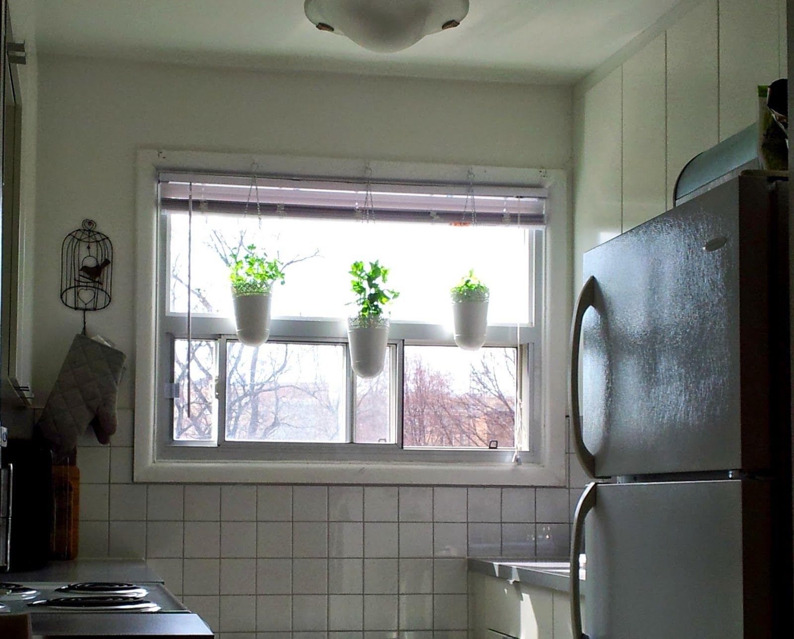 Garden outside kitchen window navigatorspbfo