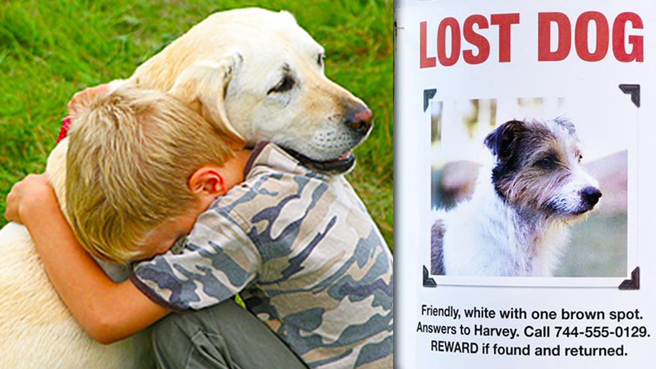 Top 5 Lost Dogs Found Reunited With Owners Man Finds Stolen
