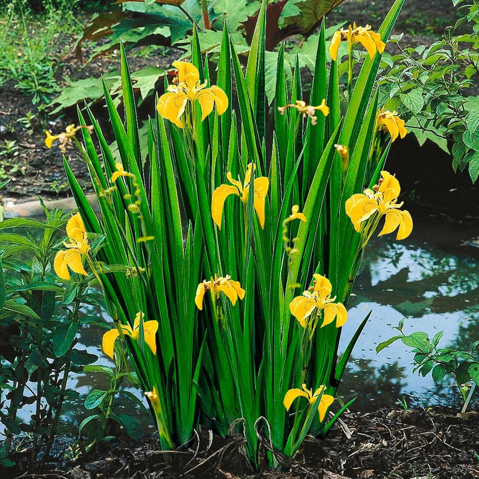 43++ Gelbe pflanzen auf dem feld Sammlung
