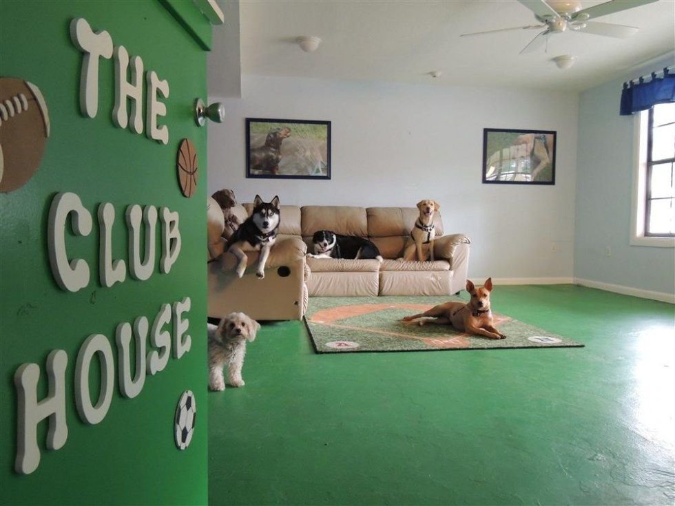 indoor doggie day care Google Search Dog daycare, Dog