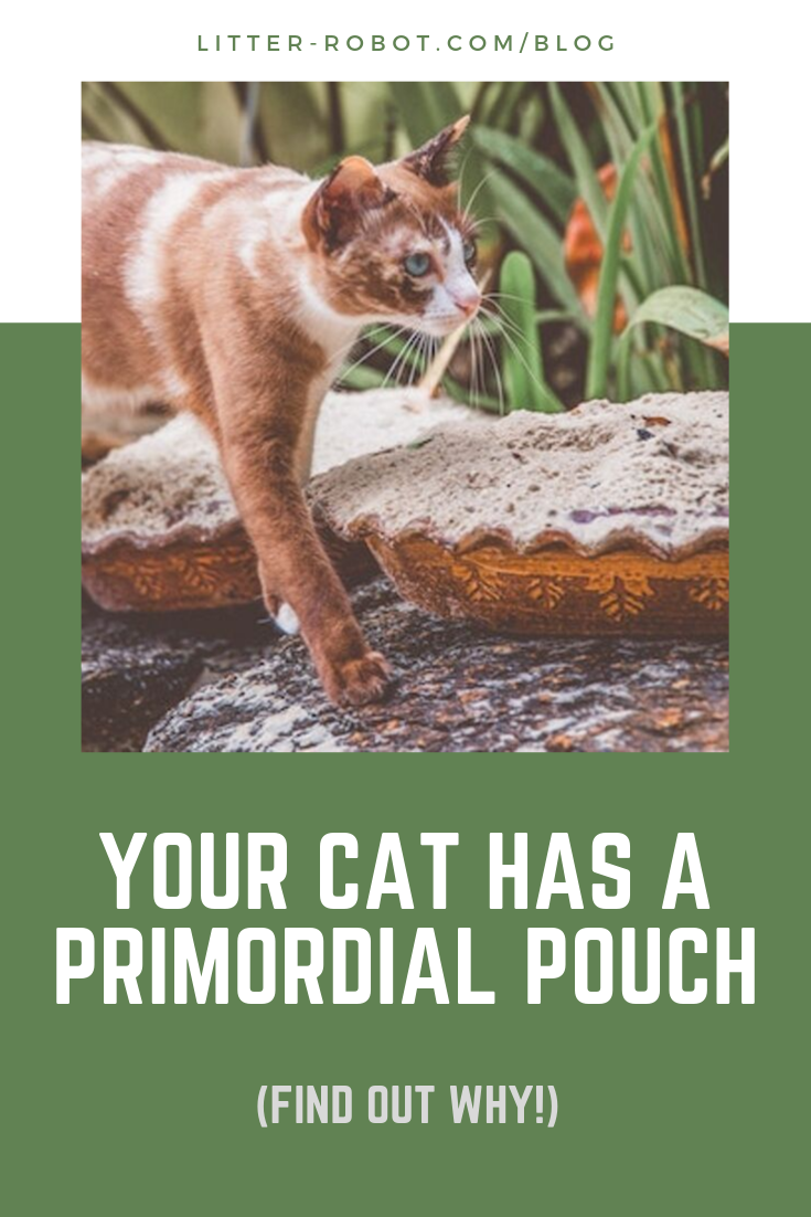 Your Cat Has a Primordial Pouch (With images) Primordial