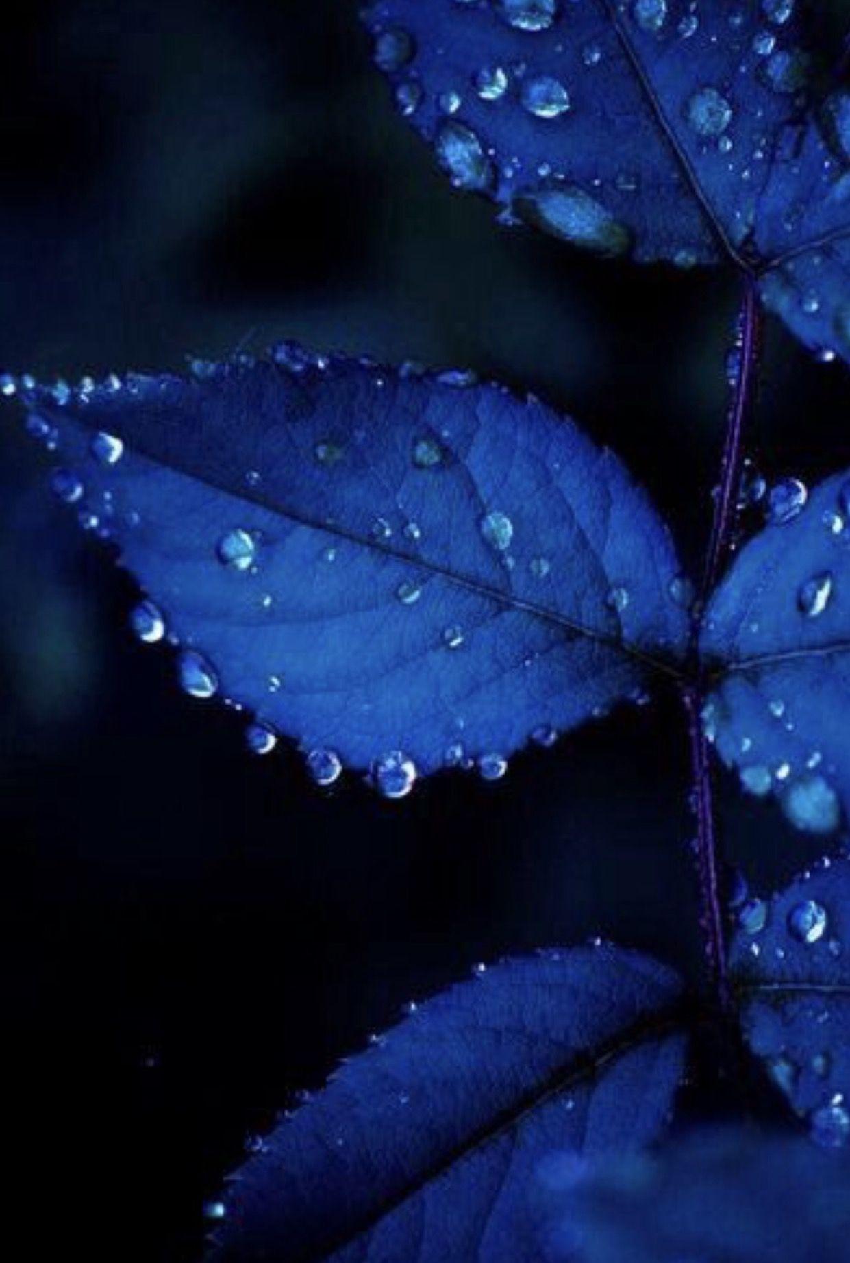 Lovely Blue aesthetic, Blue leaves, Feeling blue