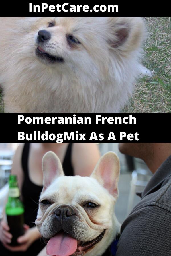Tags pomeranian french bulldog mix french bulldog and