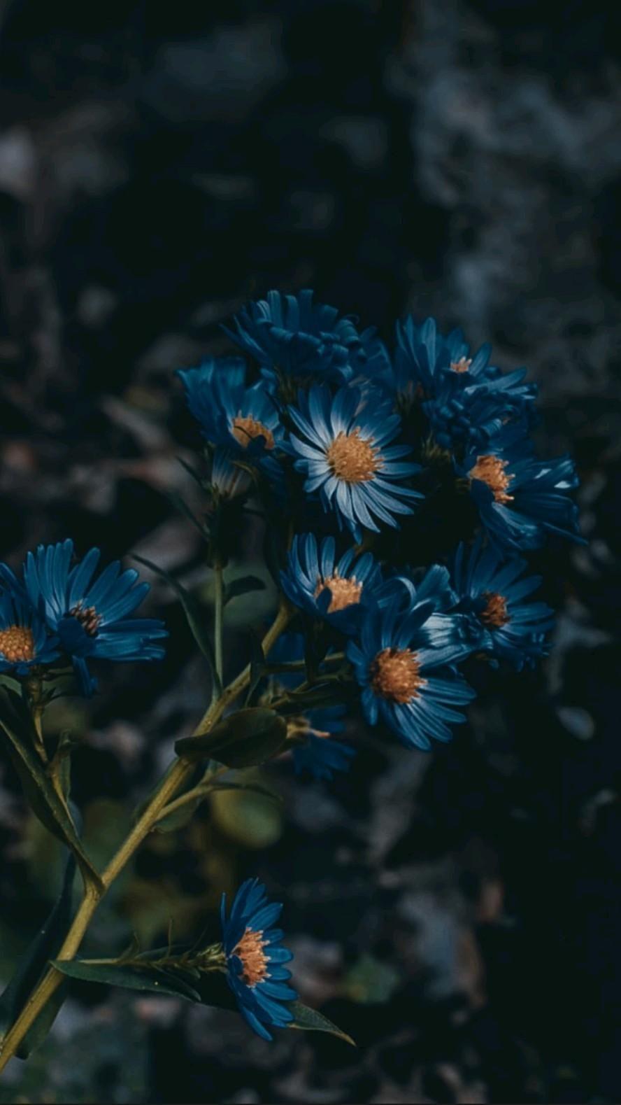 Blue beauty 💙