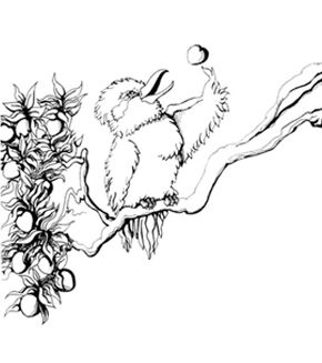 Free Online Kookaburra Colouring Page Kids Activity Sheets