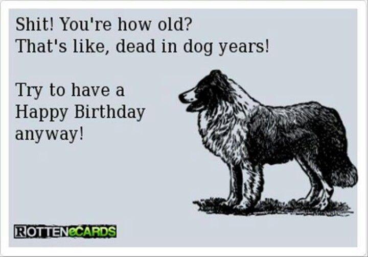 Birthday Insult Happy Birthday Funny Ecards Funny Happy Birthday Pictures Happy Birthday Funny