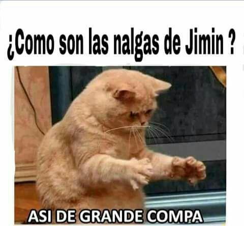 Bts Zs Ia S Memes De Gatos Divertidos Memes De Borrachos Chistosos Mascotas Memes