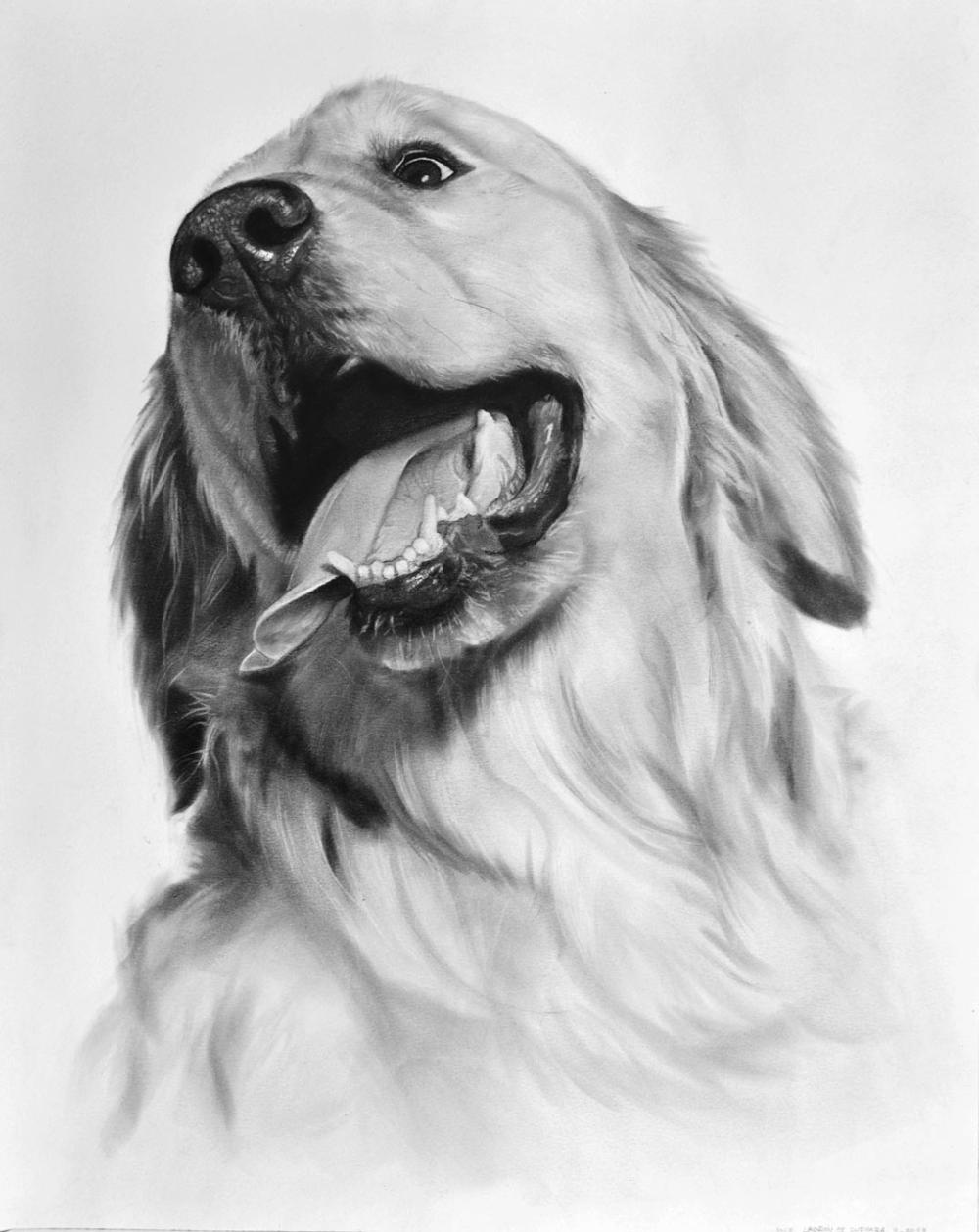 Golden Retriever Drawn In Pencil Steemit Golden Retriever Drawing Dog Drawing Dog Paintings [ 1258 x 1000 Pixel ]