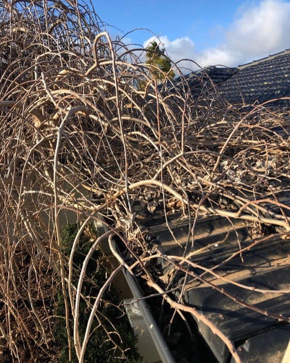 Overgrown trees? Are they intruding your gutters? Here are ...