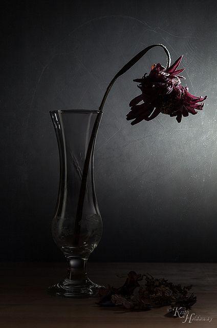 Lifeless Romeo And Juliet Ta 337 Class Flowers Wilted Flowers