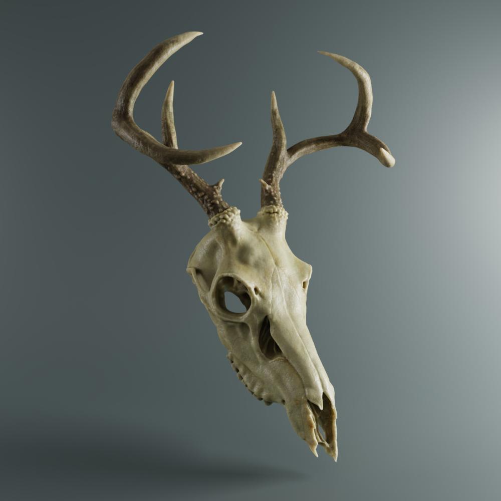 Pin On Bones