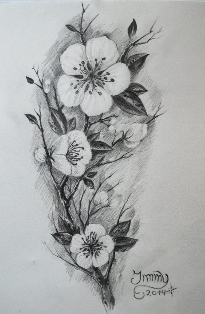 Black And White Cherry Blossom Tattoos Tattoos On Pinterest Matching Couples Cherry Blossoms And Cherry Blossom Tattoo Blossom Tattoo Cherry Blossom Drawing