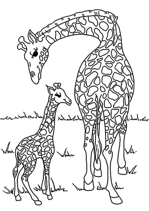 ausmalbilder tiere19 animal coloring pinterest